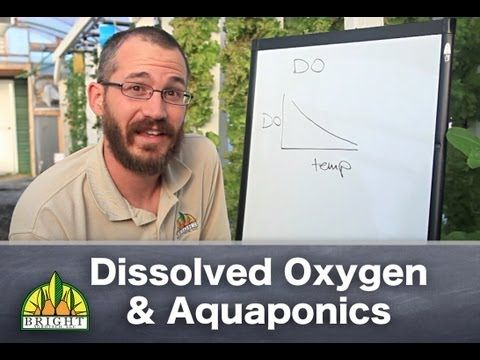 Aquaponics & Dissolved Oxygen: The Basics - YouTube- If you're an aquaponic producer, or if you're thinking about getting into aquaponics, you'll need to consider dissolved oxygen levels in your system. In this video, Nate Storey, Co-Found of Bright Agrotech, gives a brief overview to help our aquaponic YouTube followers be successful with dissolved oxygen and aquaponic production. Learn more about aquaponics here: http://brightagrotech.com/aquaponics
