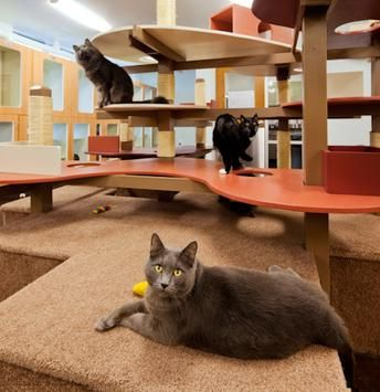 olde towne pet resort dulles in sterling virginia cat play area by animal arts