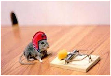 Shop online @ http://store.parsonspestcontrol.com/ for best DIY Pest Control products!