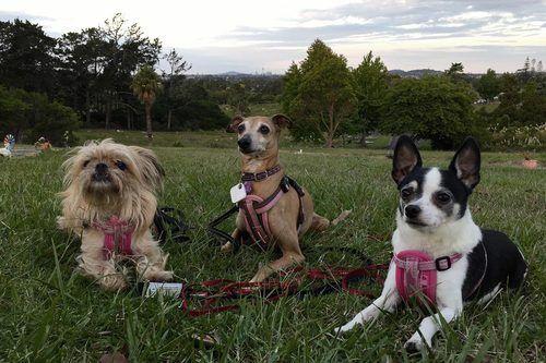 Pottle ,Thalia and Pinto