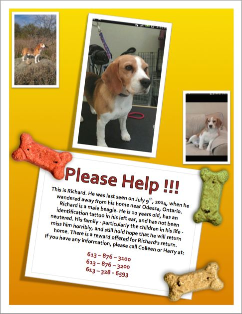 Richard missing from Odessa, ON.  since July, 2014.  He is a 10 year old intact Tricolor beagle with a tattoo in his left ear.  If seen please call the owners at 613-876-3100 or 613-876-3200, or 613-328-6593.
