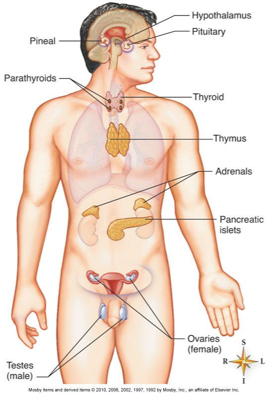 21 best the explanation of endocrine gland hormones and its function reproductive system diseases ccuart Image collections