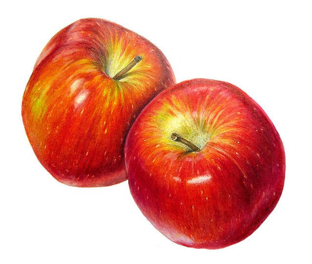 Braeburn Apples by Sigrid Frensen, via Flickr / Coloured pencil drawing (11 x 10 cm) on Fabriano Designo 5 Liscia paper.