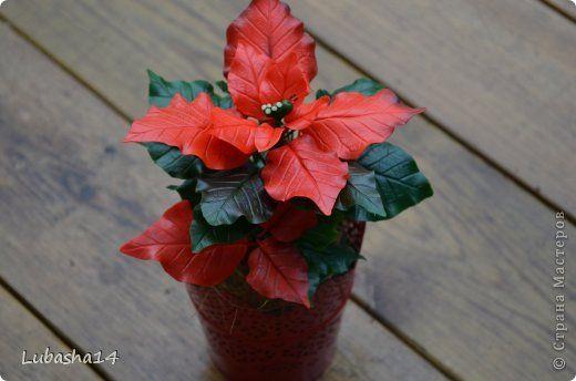 Мастер-класс Флористика искусственная Новый год Лепка Рождественский цветок пуансетия из холодного фарфора Фарфор холодный фото 54