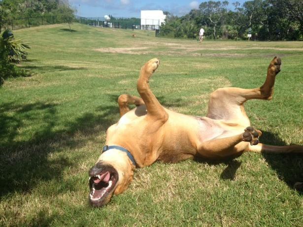 Michael Crotty Bicentennial Park In Ormond Beach FL 4 Acre Dog