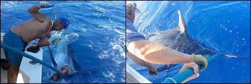 sea fishing in Tenerife