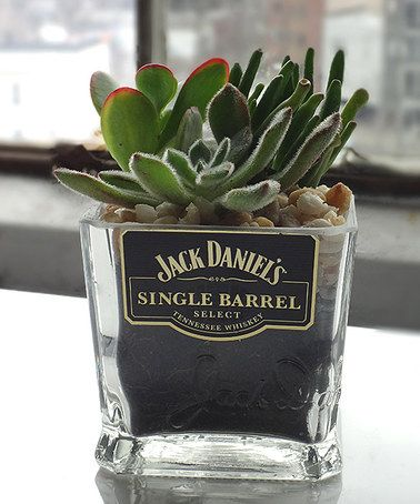 Jack Whiskey Bottle Garden Succulent Holder by Rehabulous Put a plant into this base made from repurposed Jack Daniels bottle for some unique style. Plant not included 8'' W x 5'' H x 3'' D Glass Made in the USA