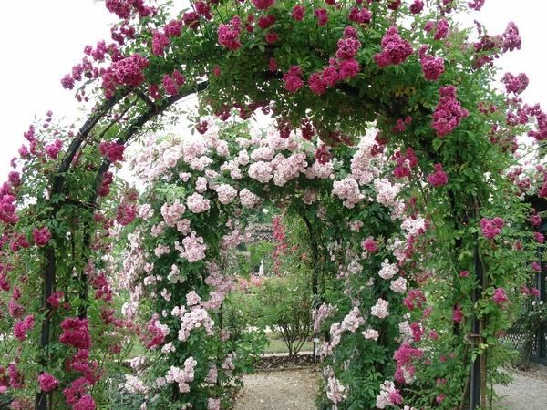 Best 25+ Rose garden design ideas on Pinterest   Flowers garden ...