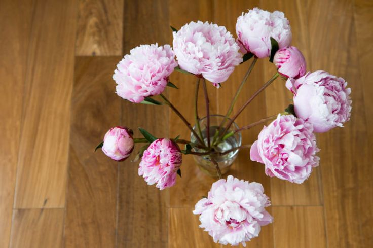 Before putting your flowers in a vase, add several drops of vodka and a teaspoon of white sugar, which delays wilting. When your flowers eventually do start to die, add a shot of vodka into the water and the stems will stand up straight again for a day or two