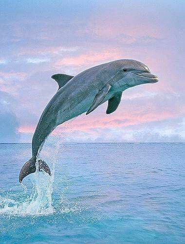 Do you see Our Creator's Plan surrounding the dolphin? Just Breathe!