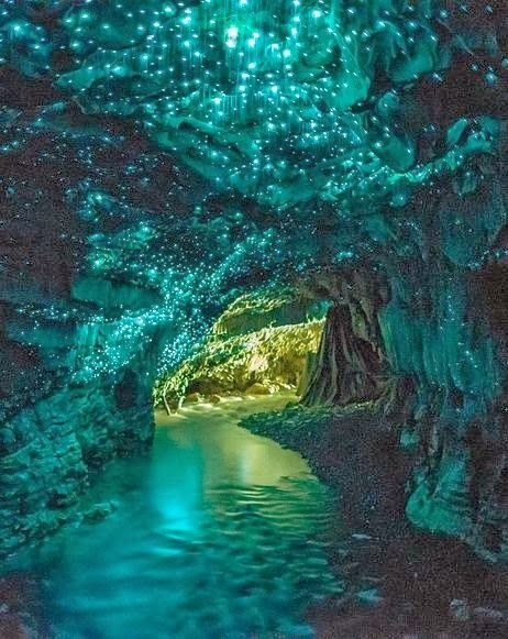 Glow Worm Caves in Waitomo, New Zealand