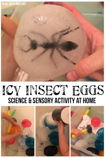 Icy Insect Eggs - a sensory and science activity for toddlers and preschoolers. Letter I.