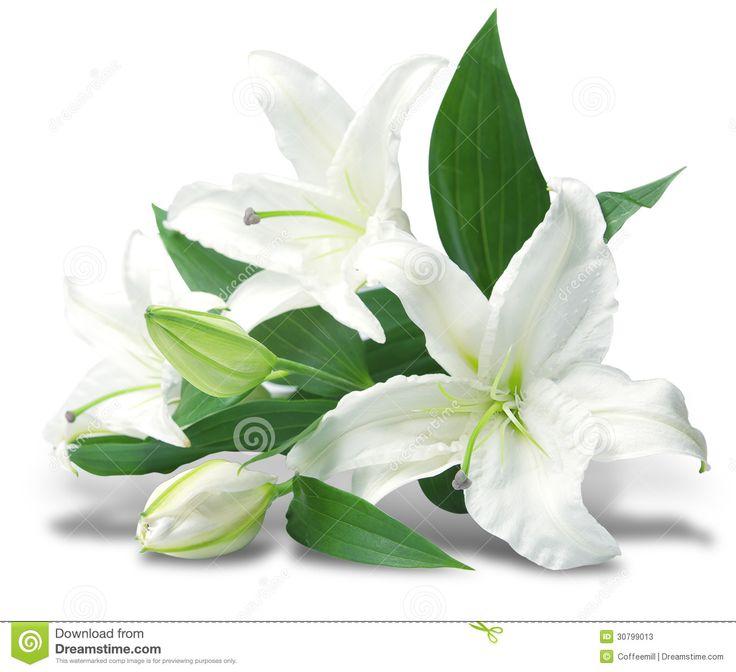 46 best images about white flowers on pinterest wedding for Bouquet de lys