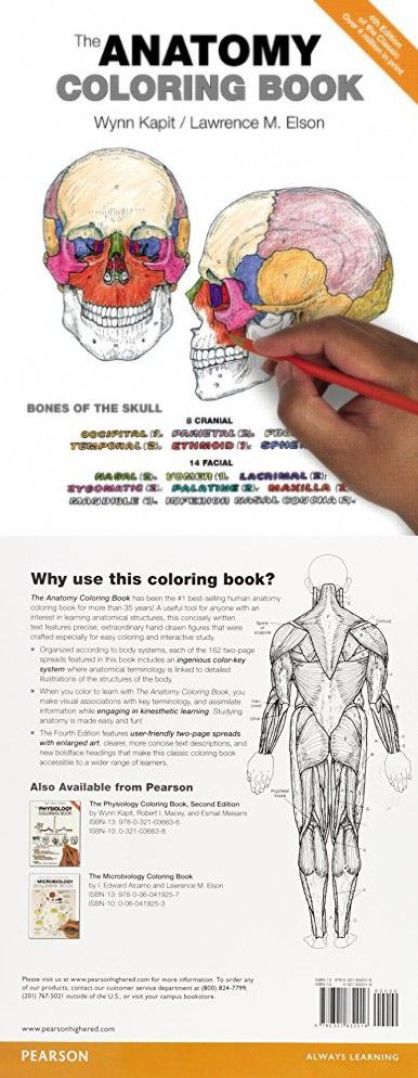 The 25+ best Anatomy coloring book ideas on Pinterest | Anatomy ...