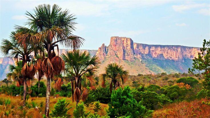 A preocupação com a preservação do Parque Nacional da Chapada dos Guimarães remonta ao início do século passado. O local é uma das belezas do estado do Mato Grosso. Vale a pena visitar! Foto: @pedrobonna