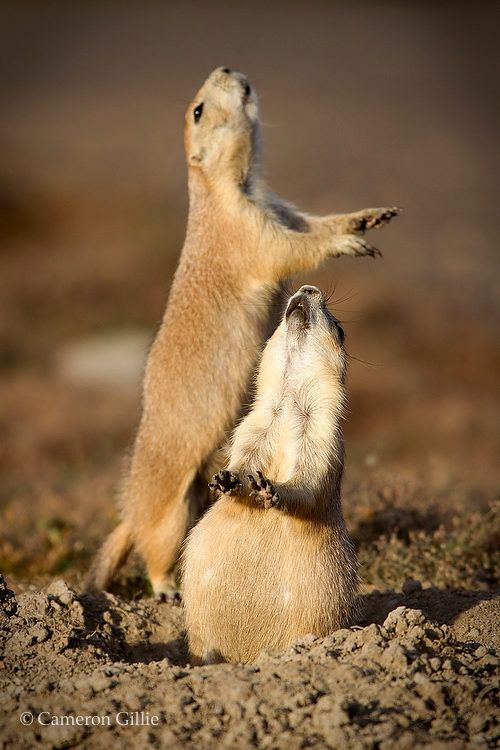 how to take care of a prairie dog