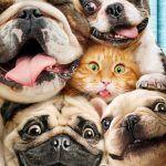 King And Queen 2018 Kadomeesters Wenskaart Humor Leeftijd Honden Katten 2 Kadome…