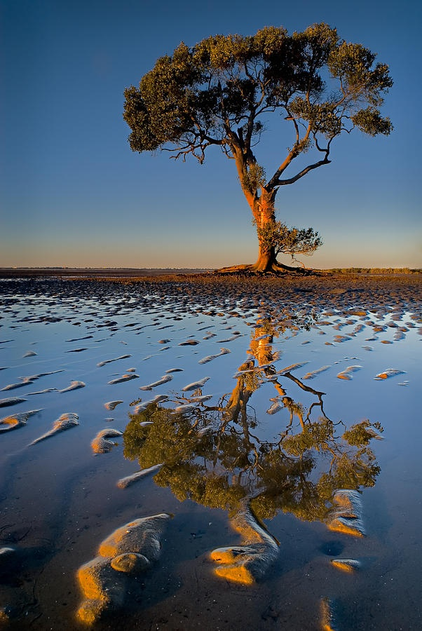 ✯ Mangrove Tree ~Usually I'd put this in Nature, but I love reflection photography, and trees, so it's a perfect fit.