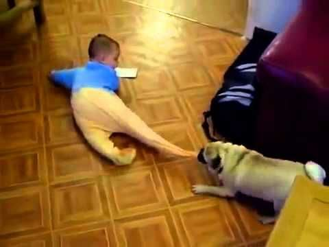 This pug loves his master so much that he wants to play all day with him in his bed! Just love this video!