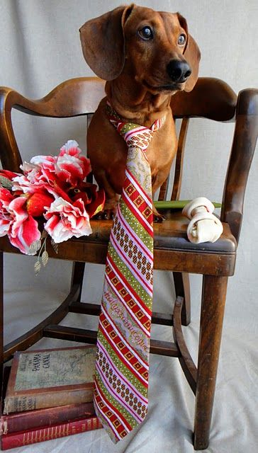 going courtingChristmas Cards, Awesome Ties, Dachshund, Doxie, Animal En, Weiner Dogs, Handsome, Wiener Dogs, Happy Fathers Day