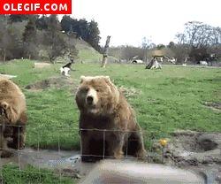 oso saludando gif - Buscar con Google