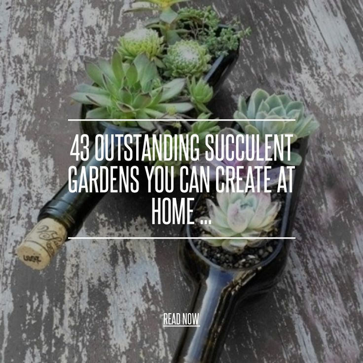 43 Outstanding Succulent Gardens You Can Create at Home ... - Gardening [ more at http://gardening.allwomenstalk.com ] Succulent gardens are a great way to add personality to your space. They are fairly simple to care for and with so many choices, you can mix and match them to your heart's content. Depending on where you live, you can grow succulents indoors or outdoors with ease. Check your zone and match it to your choices to be sure. T... #Gardening #Short #Source #Hanging #Huge…