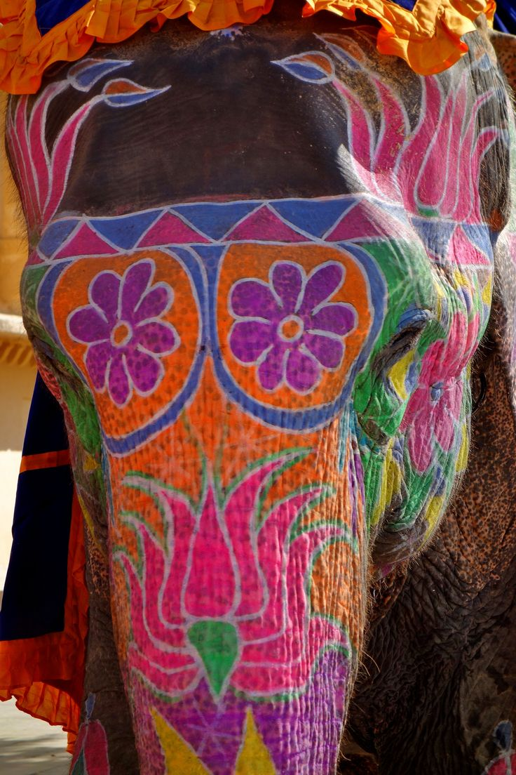 25 best painted indian elephant ideas on pinterest