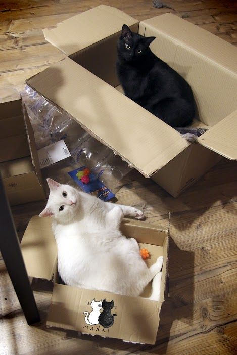 Mańki – Google+ #cats #cat #funnnycats #neko #gato #katzen #mańki
