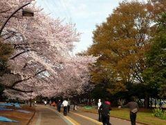 駒澤オリンピック公園は東京の都心にあるけどサイクリングにはピッタリの公園ですよ 公園の中を2.1キロの自転車専用の道が整備されていて春の桜に始まり四季折々の風景を楽しみながらサイクリングを楽しめるのが魅力ですね ペアペアという4輪自転車も用意されているから家族で楽しめます tags[東京都]