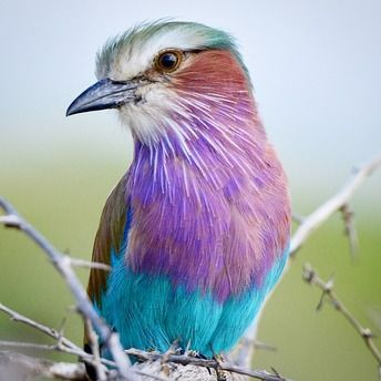 """""""Timing, trust and perfect lighting are ingredients for the perfect capture. Lilac-breasted roller Kruger National Park."""""""