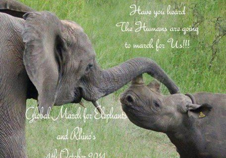Today sees the world celebrate World Rhino Day! Show your support by joining the Global March for Elephants and Rhinos on October 4th 2014 across the globe. Check the link www.march4elephantsandrhinos.org to see where it's all happening! Please share and spread the word so the world can see that enough is enough!