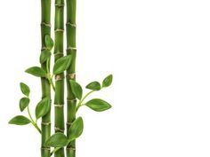 What Are the Meanings of Lucky Bamboo Stalks?