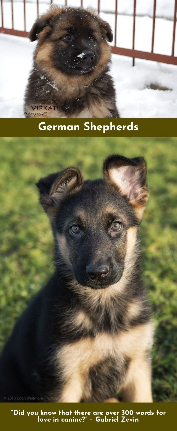 Look At The Webpage To Read More On German Shepherds Click The