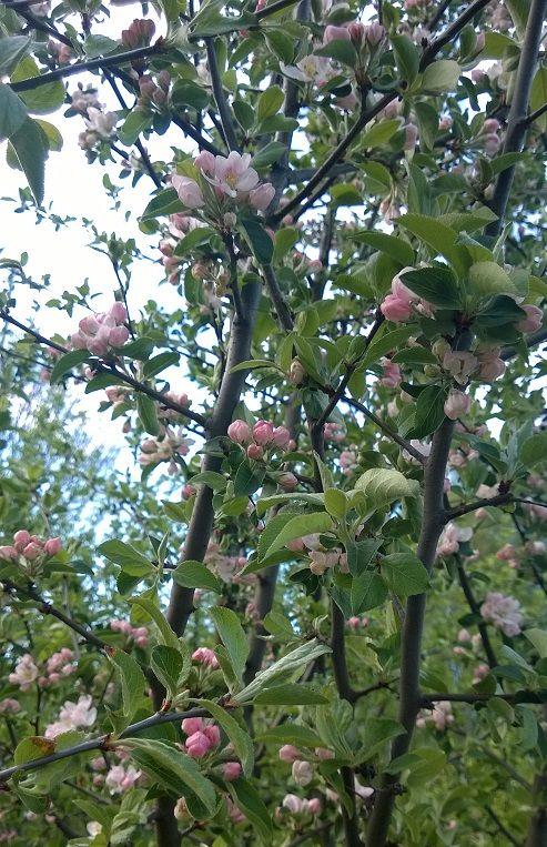 Kesäkahvila Kapusiini Kumpulan kasvitietellisessä puutarhassa