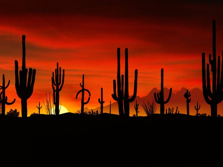 This is the Saguaros at the Sonoran Desert in Arizona. I love this. When I lived in Arizona, at night these Saguaros could look like people at times.