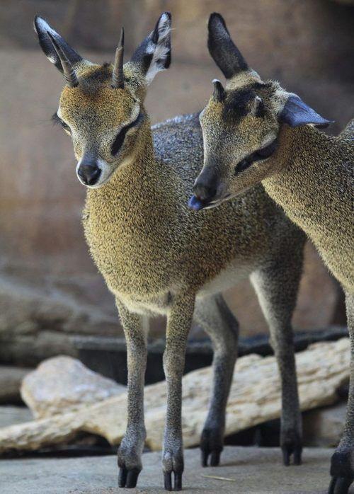 #nature #cuteness #deer or what