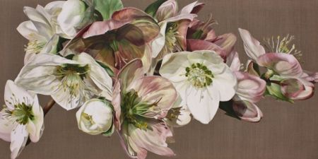 Soft Pink Hellebores 100cmx200cm www.sarahcaswell.co.uk