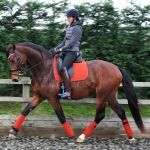 Imperial Riding / Heartbreaker Schwarz