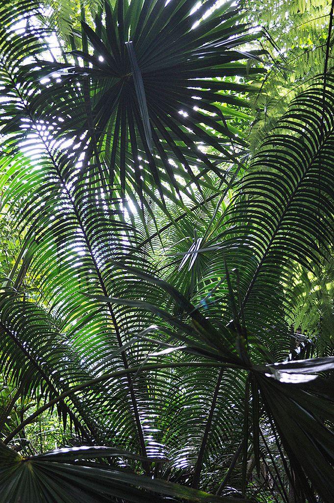 https://flic.kr/p/u6HQMm   Australian National Botanic Gardens   Palms :: © Gabriella Tagliapietra / Pinch River