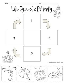 Worksheets Butterfly Life Cycle Worksheet 25 best ideas about butterfly life cycle on pinterest lifecycle heres a cute freebie to use with your unit theres no reading
