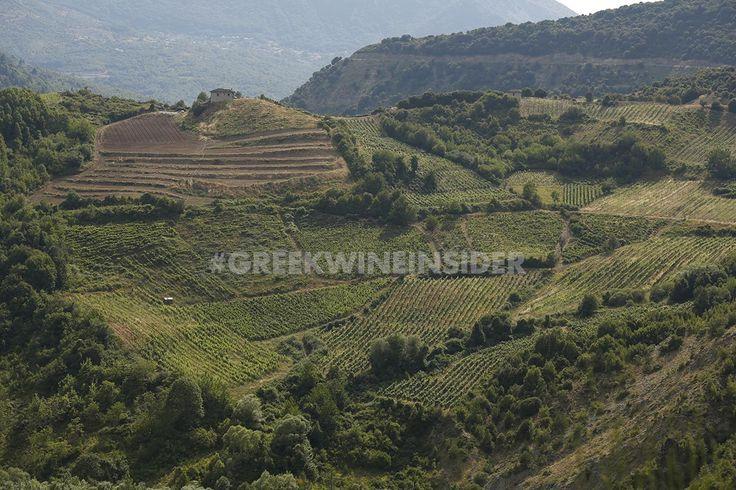 Katogi Averoff Vineyards, Metsovo, Greece