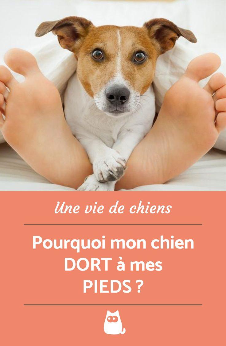 Mon Chat Dort Sur Mes Pieds pourquoi mon chien dort à mes pieds ? | chien, chiens drôles