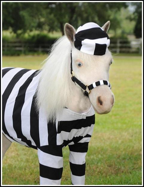Horse Costumes   Sleezy Barb Horsewear   Mini Horse Costume