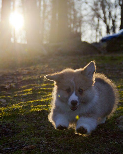 FLUFF IN THE SUN