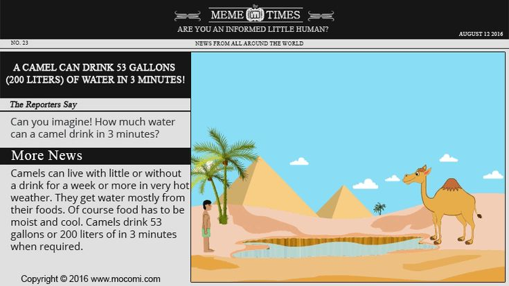 How Much Water Can Camels Drink