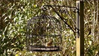 Buy Bird cage rose butterfly mousse brief rustic lantern wedding ...
