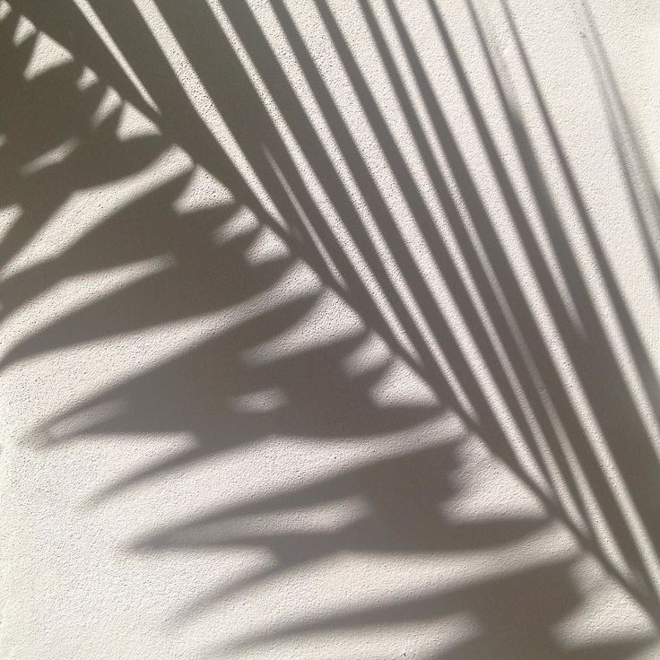 Shadow  #palmtree #palm #shadow #mallorca #inspiration #lines #repetition #nature #beauty #skygge #palmetræ #linjer #palme #repetition #natur