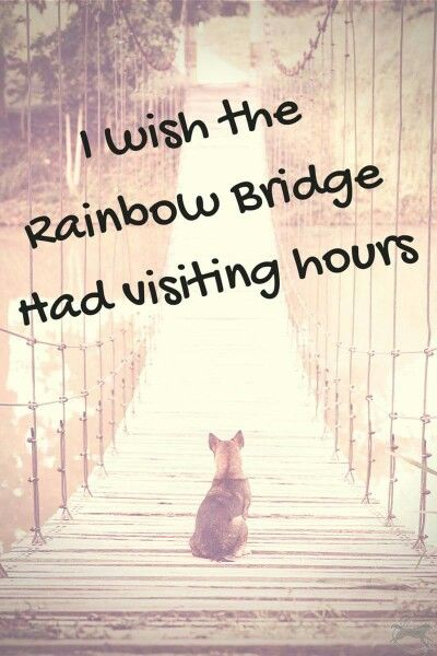 For those of you who don't know, the Rainbow Bridge is in a poem where all the late animals go..