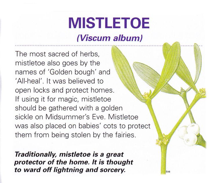 Magical herb Mistletoe