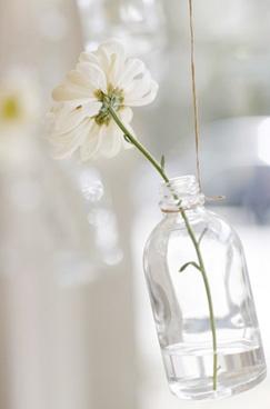 window flowers.: Bedrooms Kitchens, Vase Ideas, Decor Ideas, Inspiration Ideas, Palms Beaches, Beaches 2108, Homedecor Homeidea, Single Flowers, Window Flowers